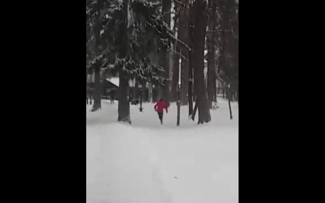 Подростки взорвали беличьи домики в Выксунском парке - фото 1