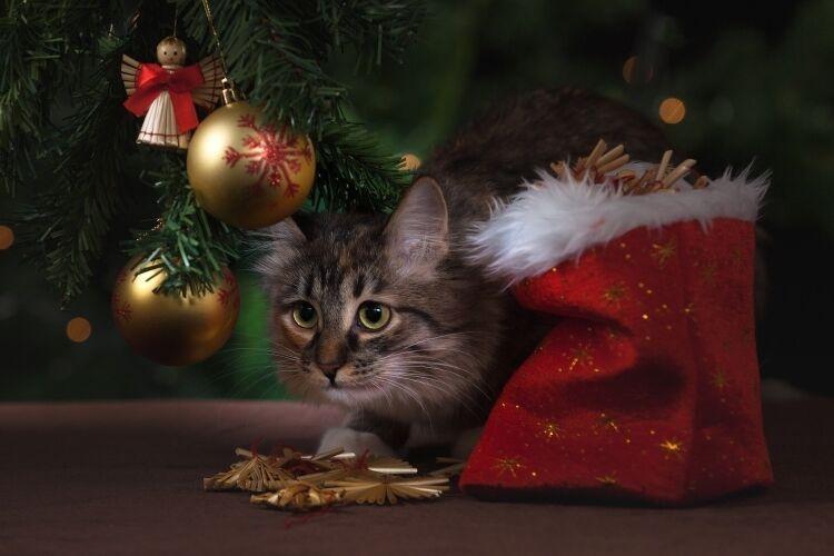 Ветеринар рассказал, как сделать Новый год безопасным для домашних питомцев